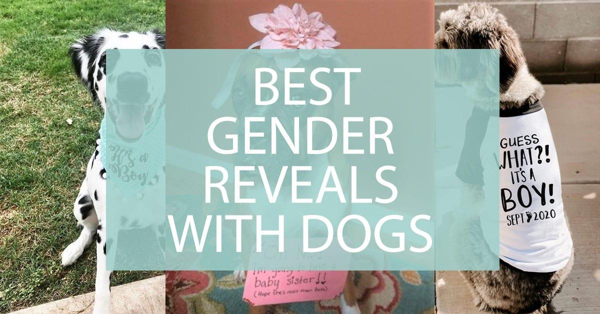 Gender Reveal With Dogs Best Dog Gender Reveals